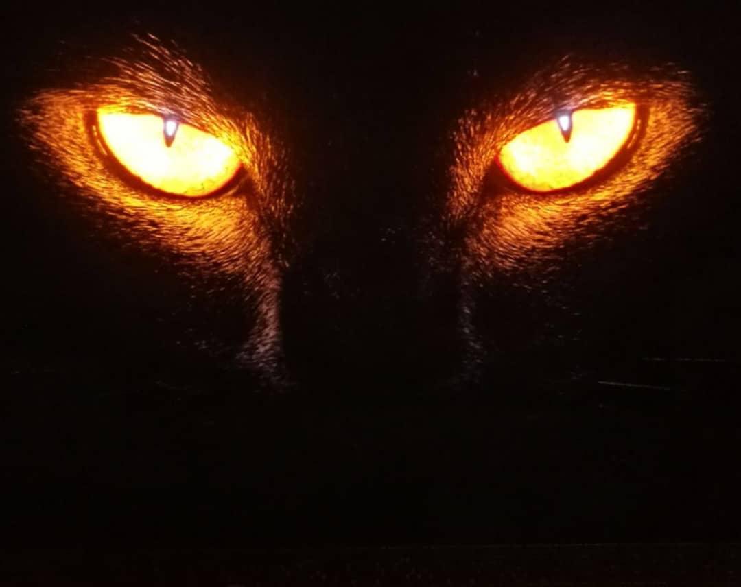 تابلو نوری گربه وحشی