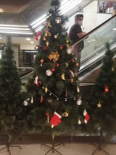 درخت کریسمس سوزنی